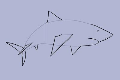رسم سمكة القرش بطريقة بسيطة