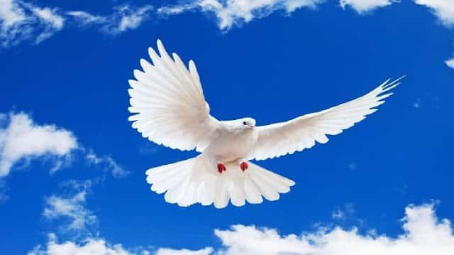تعبير عن اثر السلام على الفرد والمجتمع والشعوب