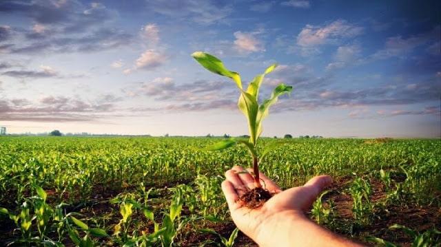 موضوع تعبير عن الزراعة واهميتها بالعناصر