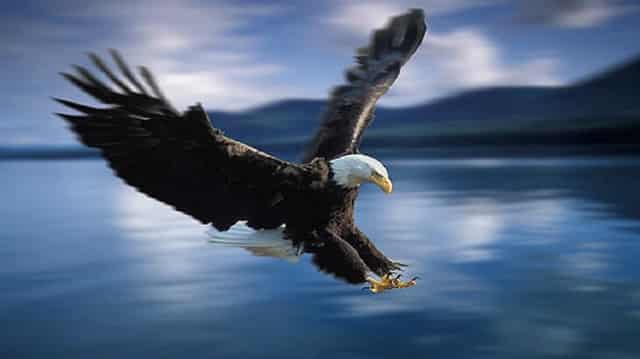 معلومات عن طائر النسر مع الصور