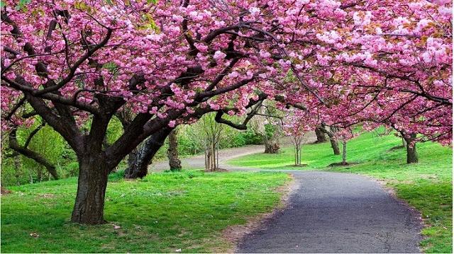 موضوع تعبير عن فصل الربيع وجماله بالعناصر