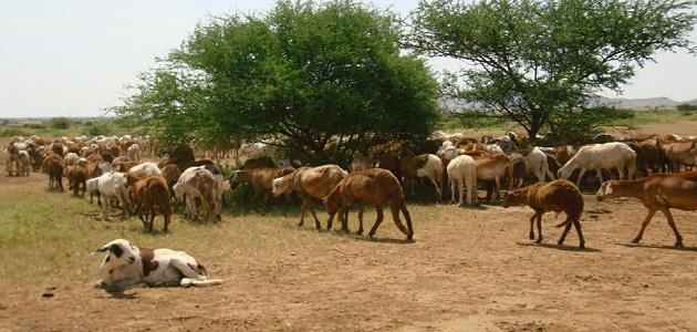 بحث عن الثروة الحيوانية فى مصر جاهز للطباعة