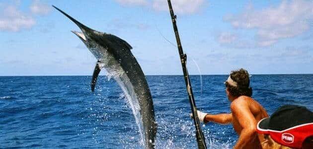 افضل انواع الطعم لصيد السمك النهري بسهولة