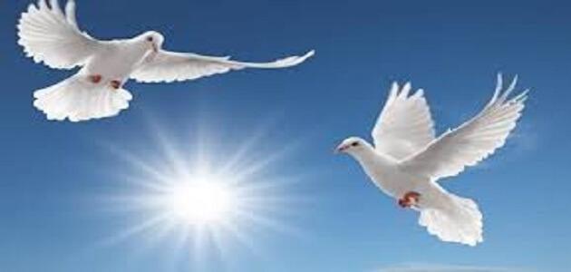 بحث حول التسامح بين الاديان السماوية