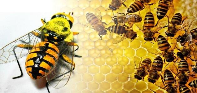 بحث كامل عن النحل جاهز للطباعة