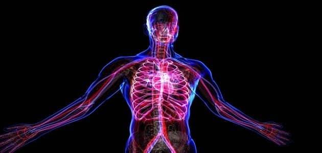 بحث حول جسم الإنسان من الداخل بالتفصيل