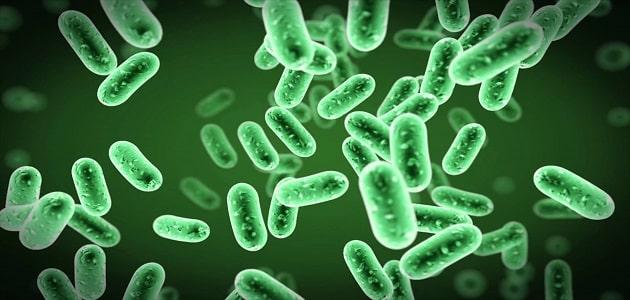 تركيب الخلية البكتيرية بالتفصيل