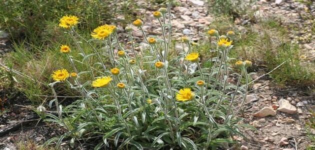 بحث كامل عن النباتات الطبيعية وفوائدها ملزمتي