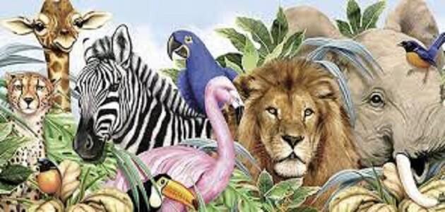 اسئلة للإذاعة المدرسية عن الحيوانات