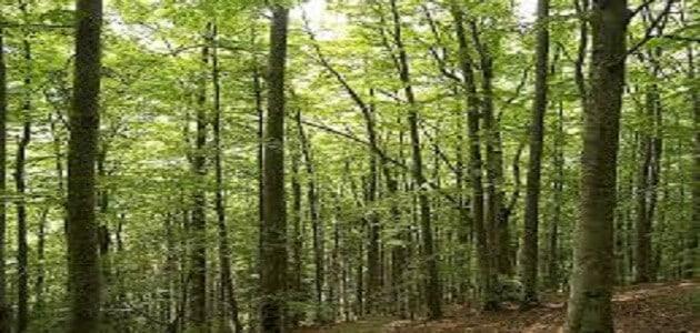 بحث عن كيف نحافظ على الغابات