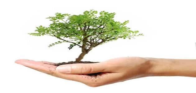 يوم الشجرة العالمي
