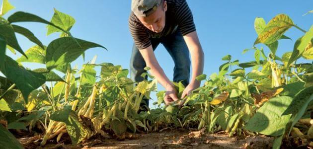 بحث عن الزراعة العضوية واهميتها