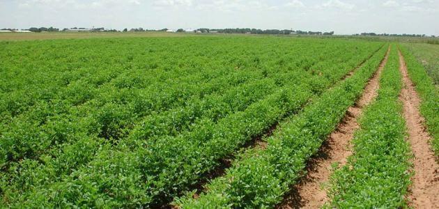 بحث عن الزراعة في مصر كامل