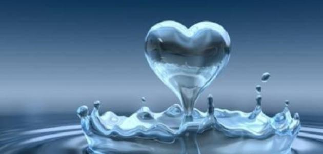 بحث عن اهمية الماء للكائنات الحية