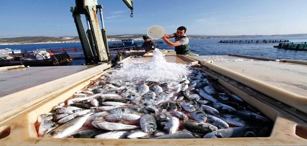 بحث عن تنمية الثروة السمكية فى مصر