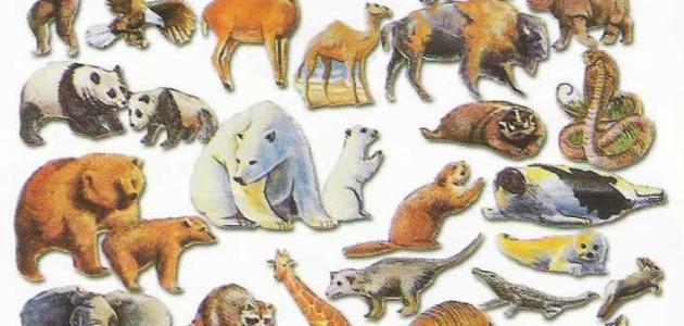 دورة حياة الحيوانات للاطفال