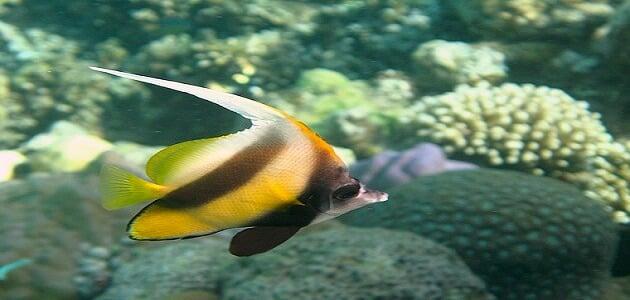موضوع تعبير عن انواع اسماك البحر الاحمر