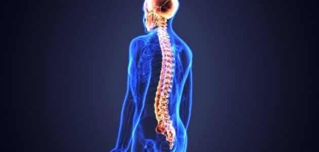 بحث عن الجهاز العصبي كامل بالمراجع