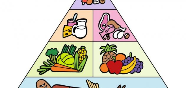 بحث عن الهرم الغذائي الحديث للاطفال