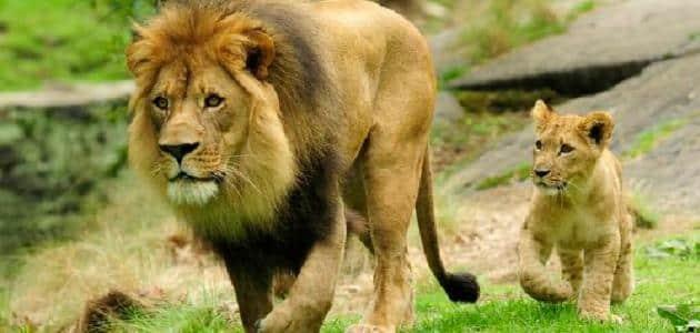 بحث عن منافع الحيوانات البرية