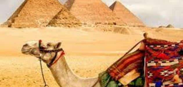 جمل عن السياحة