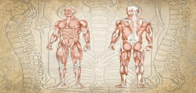 علم الأحياء البشري