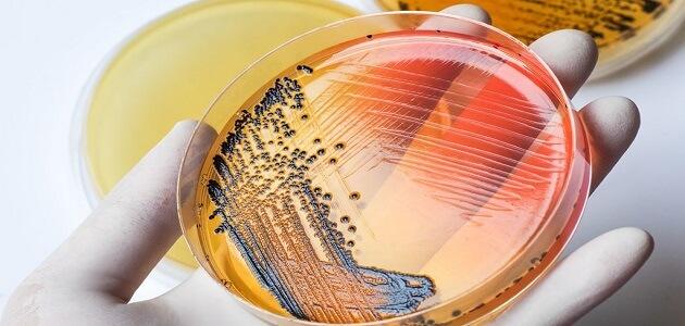 علم الأحياء الدقيقة الطبية