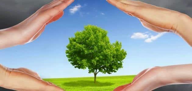 طرق الوقاية من تلوث التربة
