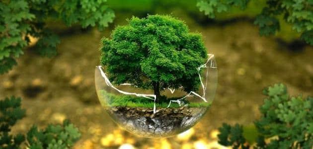 كيفية المحافظة على البيئة من التلوث