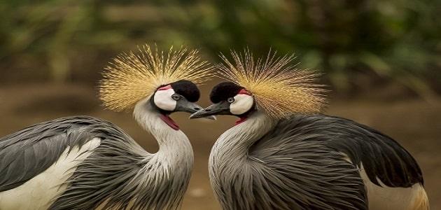 موضوع تعبير عن عجائب وغرائب الطيور